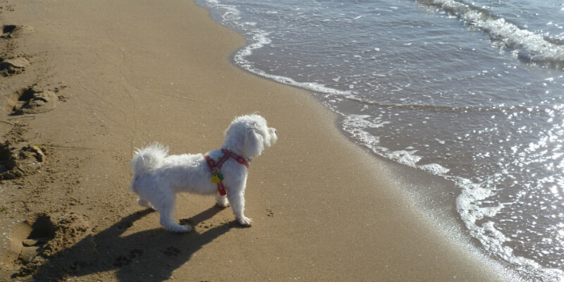 Playas para ir con tu mascota este verano